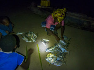 Bringing in a netfishing catch on our beach one night.