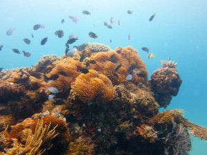 Some of the amazing variety of life just under the surface of the water around Nosy Mitsio.