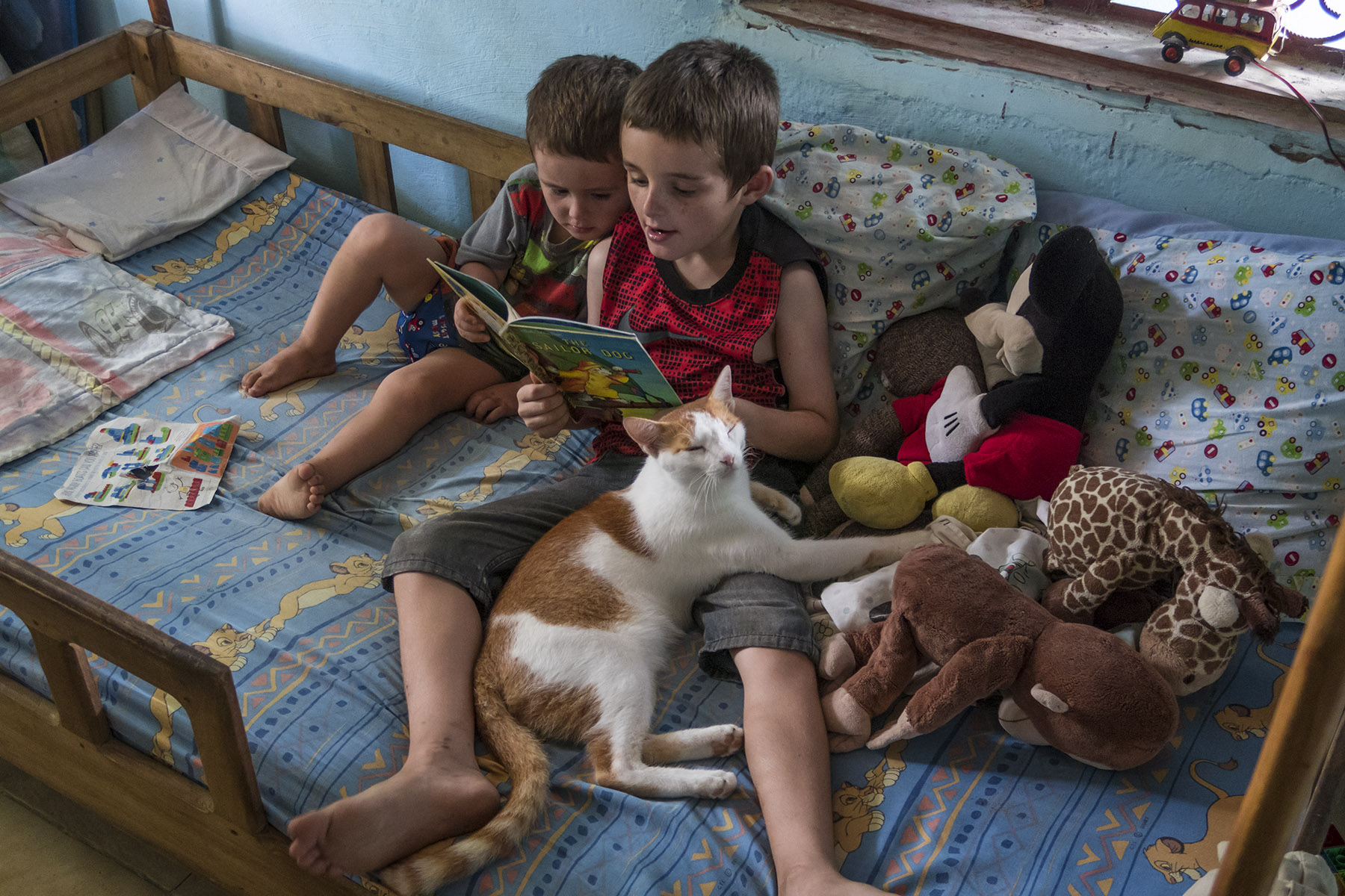 Our cat, Cuddles, was with us for six years, and he was a constant companion to our boys.